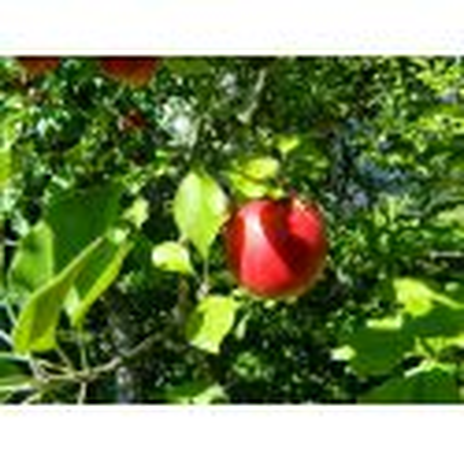Excursie la cules de mere pe Valea Dambovitei